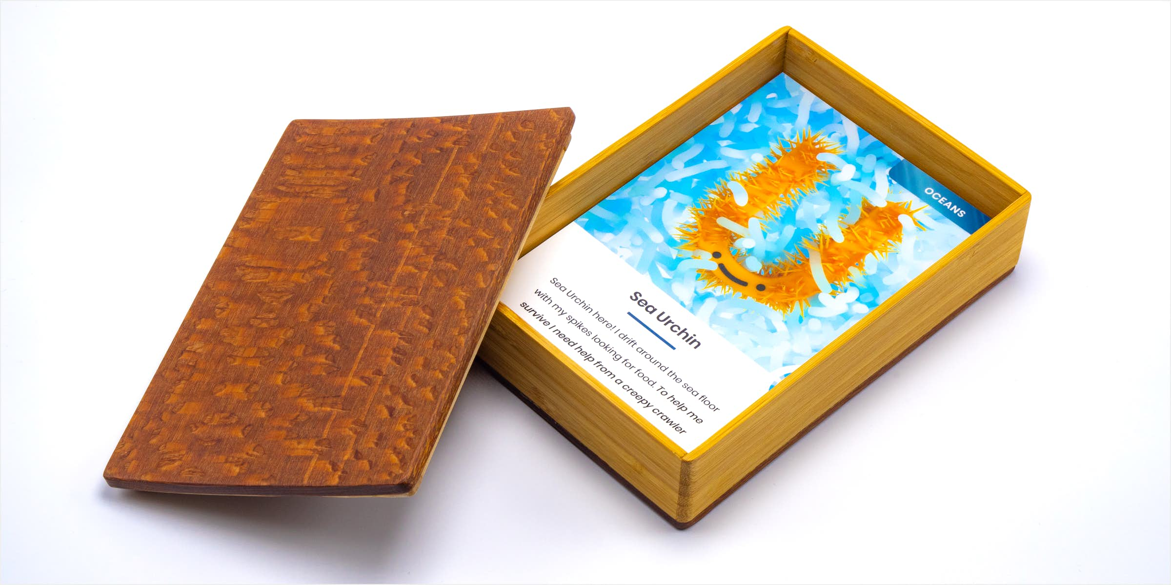 Sea urchin card inside of wooden box with lid