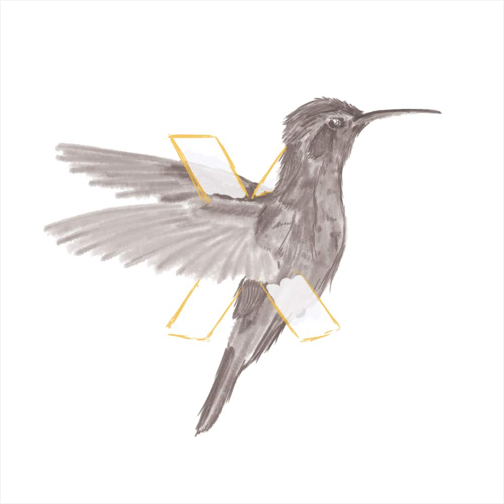 A sketch of a black and white hummingbird with its wings wrapped around the letter 'X'